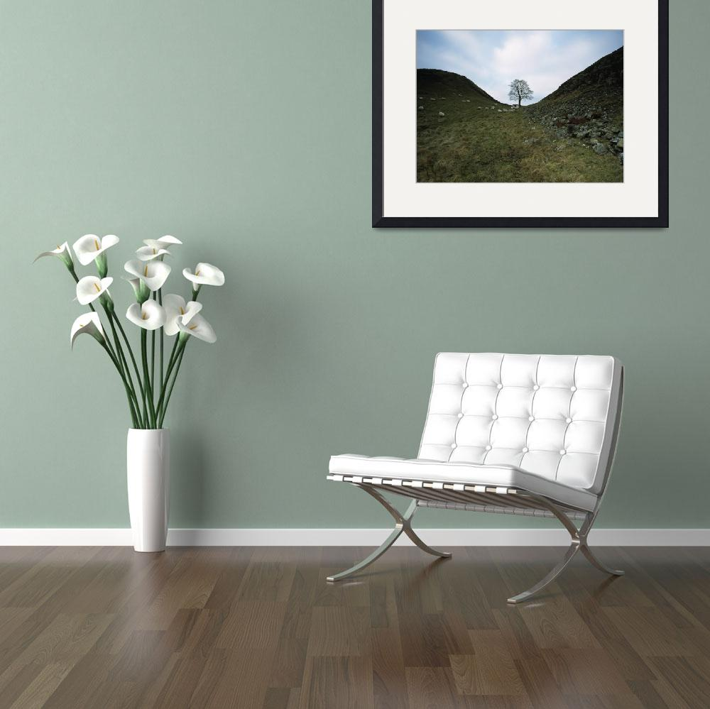 """""""Solitary Tree In Sycamore Gap On Hadrian"""