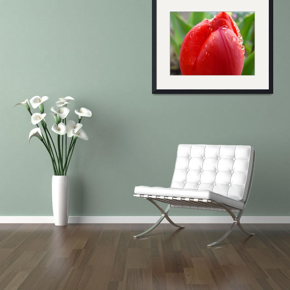 """""""TULIPS RED TULIP FLOWER 15 Spring Garden Flowers&quot  (2009) by BasleeTroutman"""
