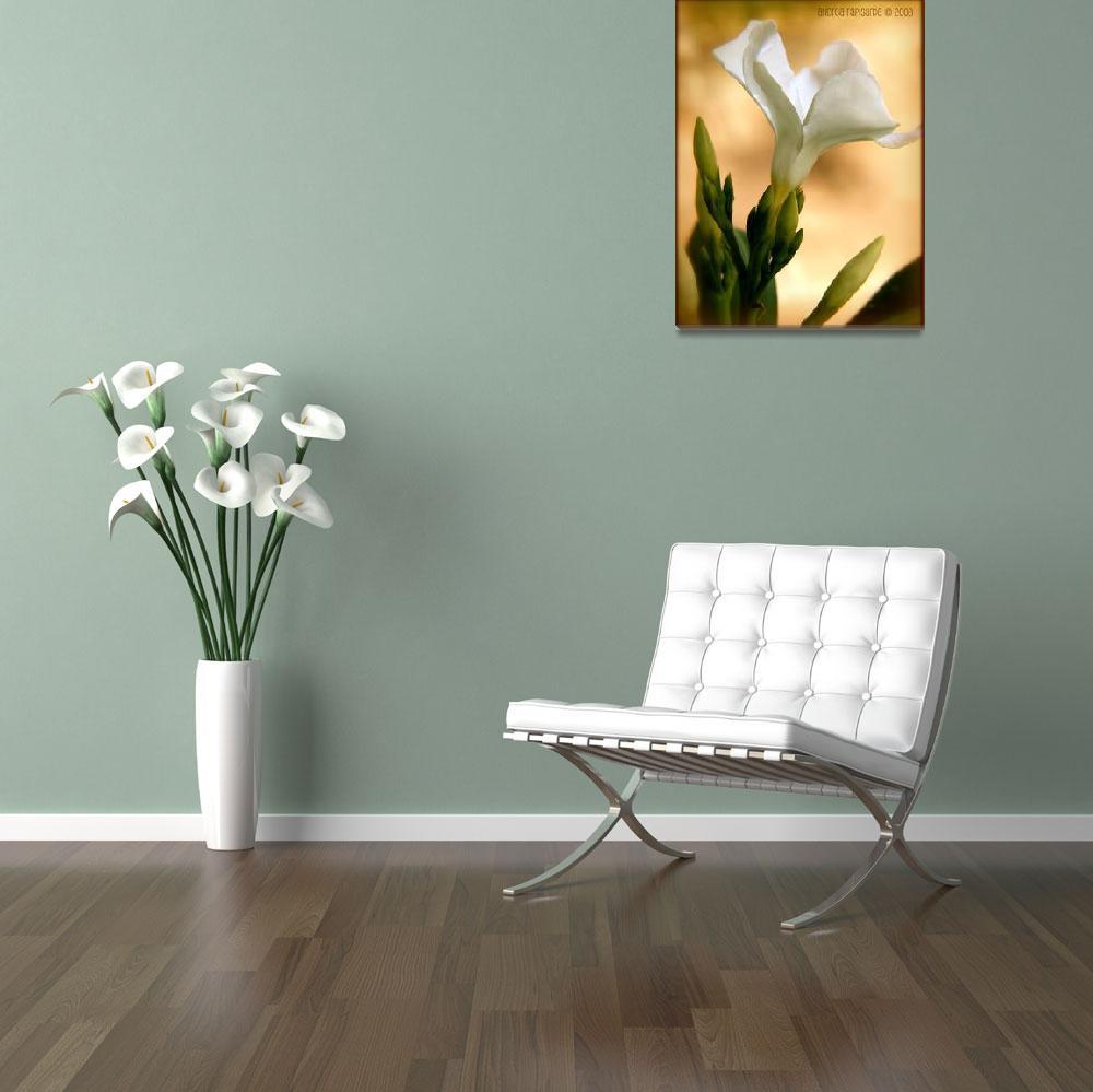 """white oleander""  (2008) by rapis60"