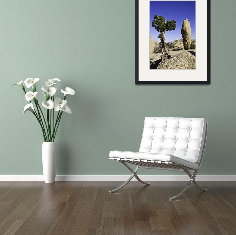 """""""Joshua Tree with Friend&quot  (2008) by bill_white"""