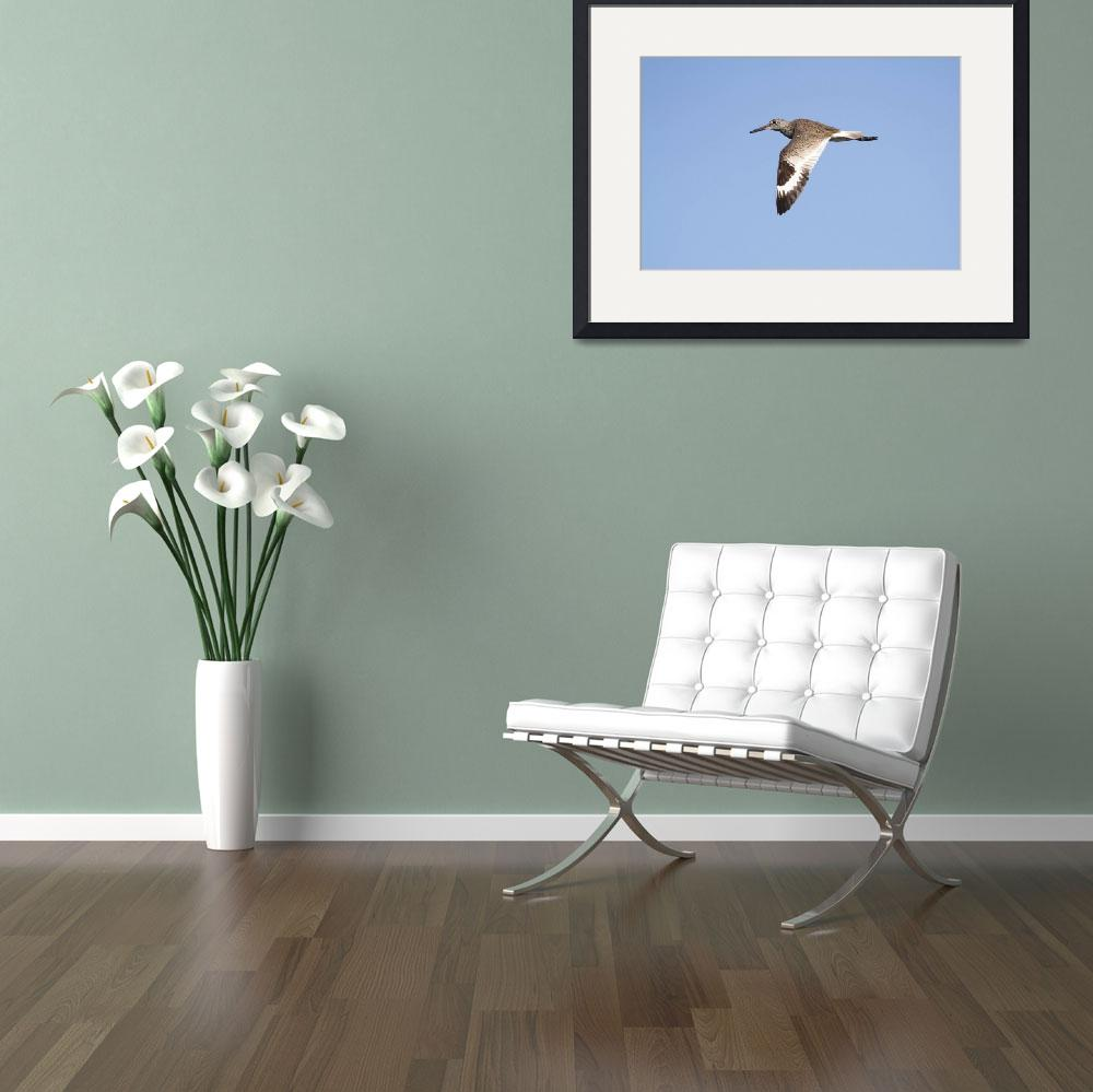 """Willet Photograph""  by ArtLoversOnline"