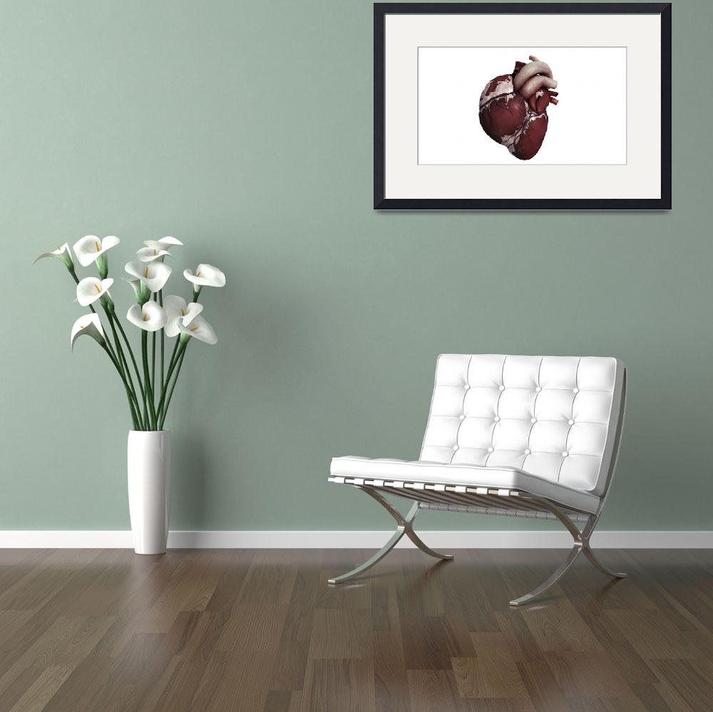 """""""Three dimensional view of human heart, front""""  by stocktrekimages"""