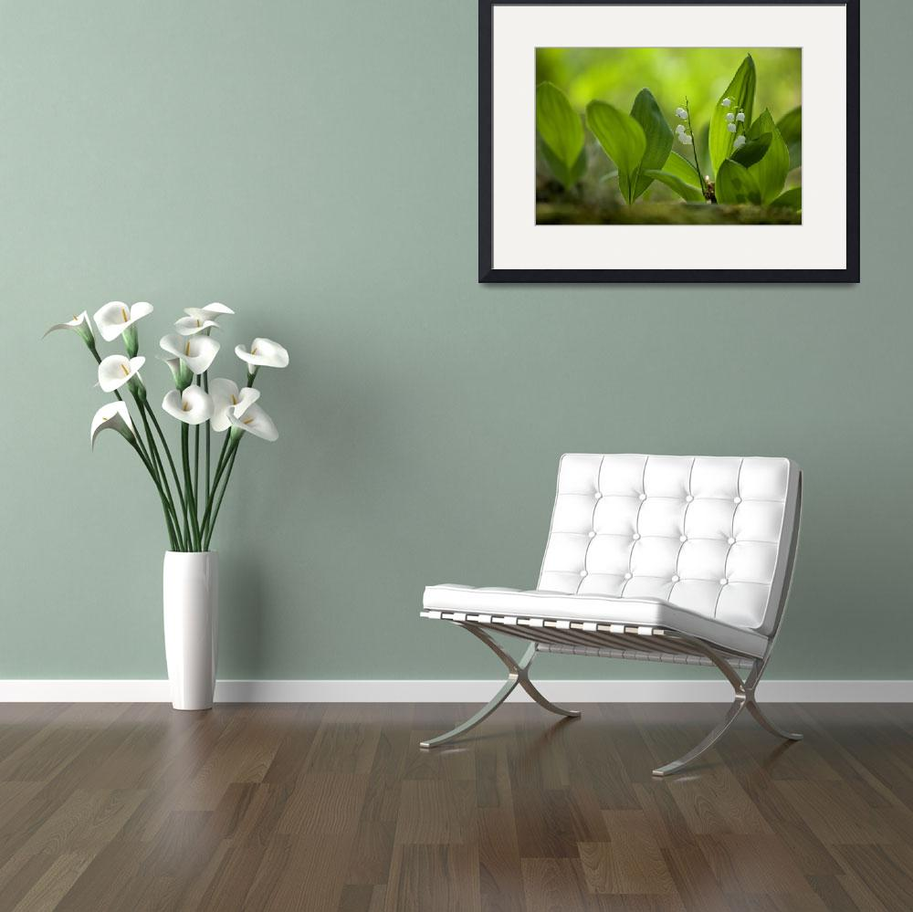 """""""Lily of the Valley&quot  (2008) by thomasherzog"""