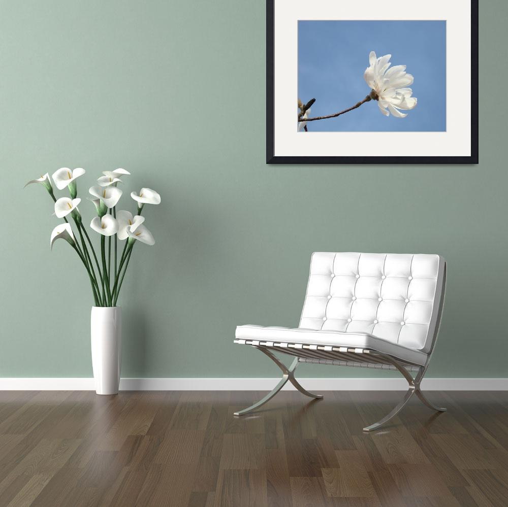 """Blue Sky Floral art White Magnolia Flower""  (2011) by BasleeTroutman"