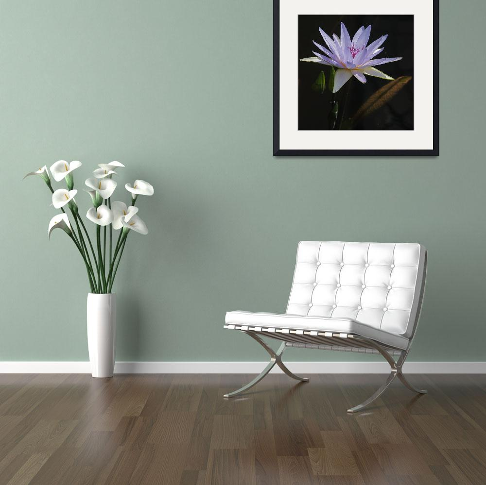 """""""Lavender Tropical Water Lily""""  (2011) by LightHeart"""