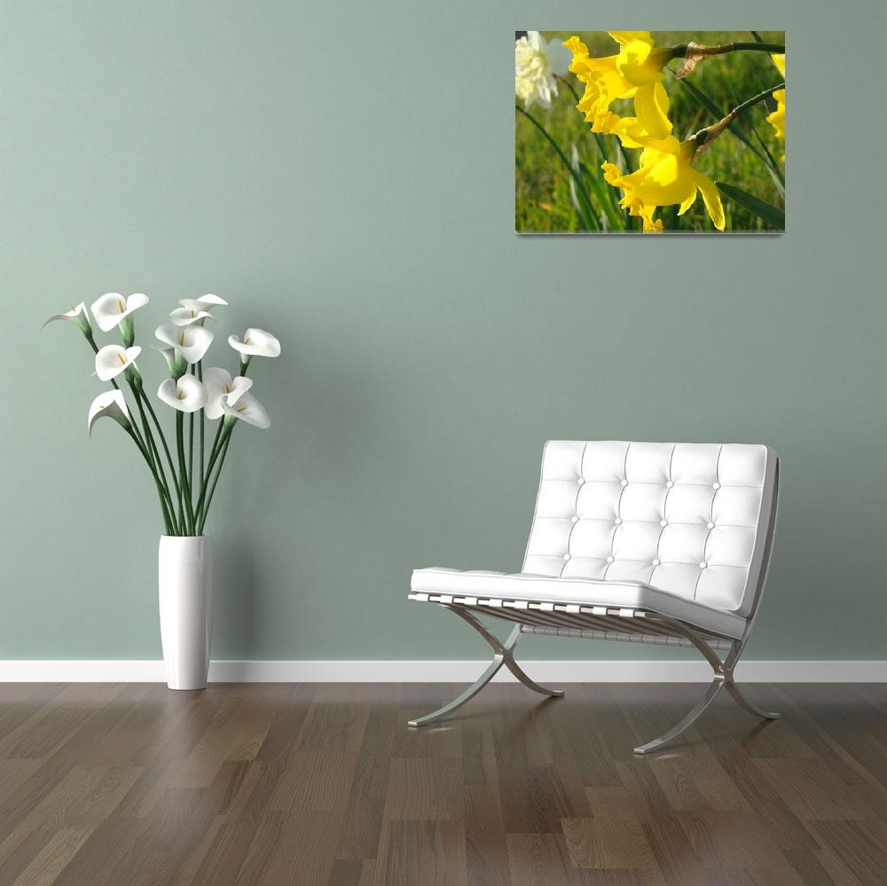 """Spring Glowing Sunlit Daffodils Flowers art prints&quot  (2014) by BasleeTroutman"