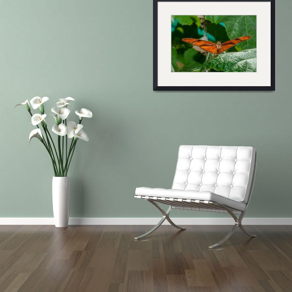 """""""Julia Heliconian butterfly, (Dryas Iulia)&quot  (2012) by eyalna"""