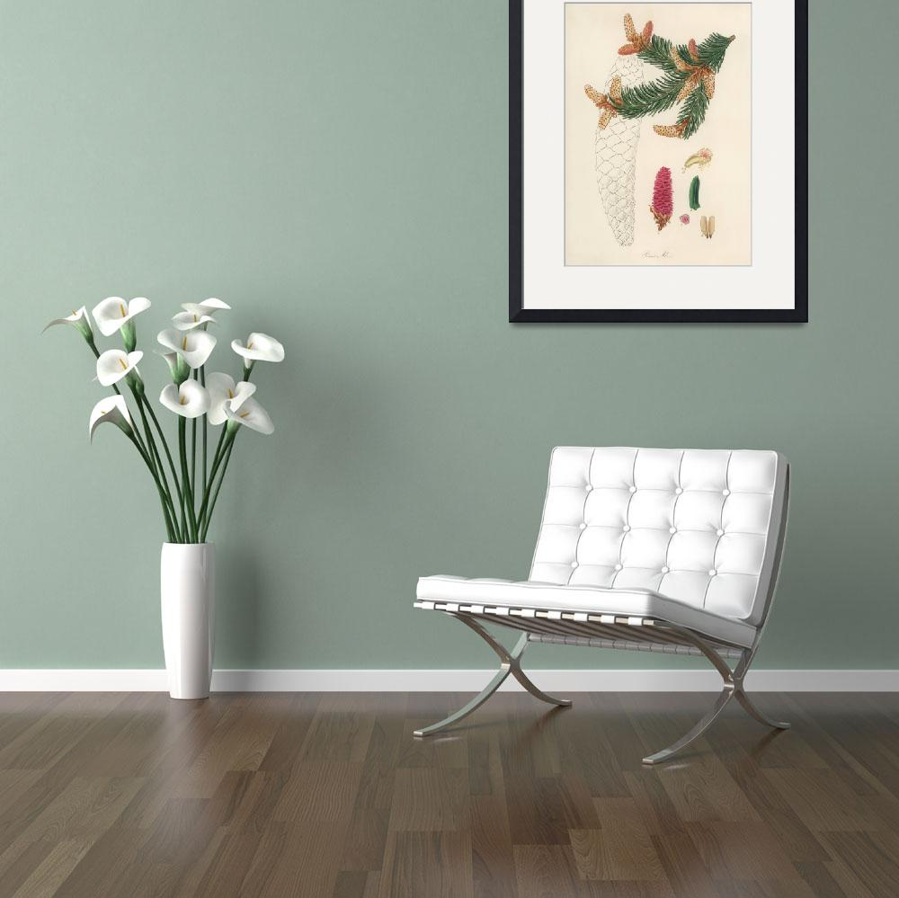 """""""Vintage Botanical Norway spruce""""  by FineArtClassics"""