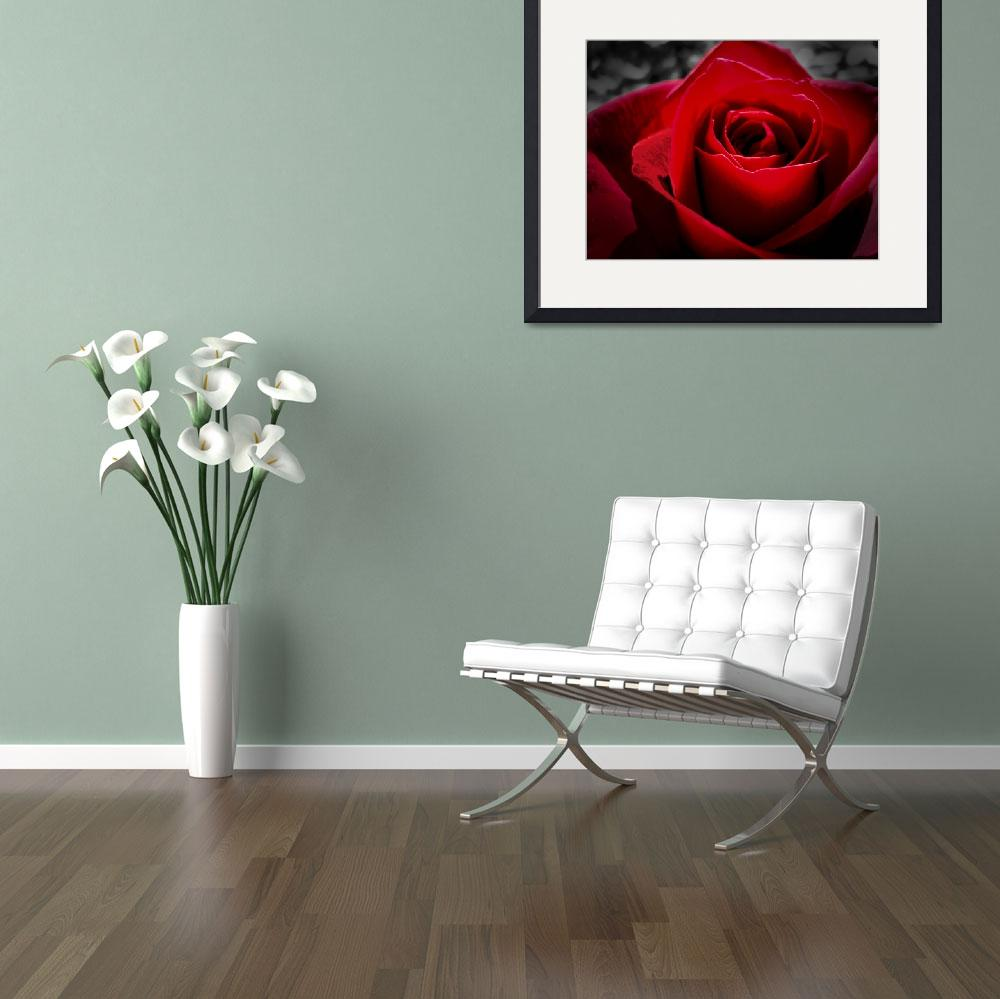 """""""Red in the Rose&quot  (2008) by bchrisdesigns"""