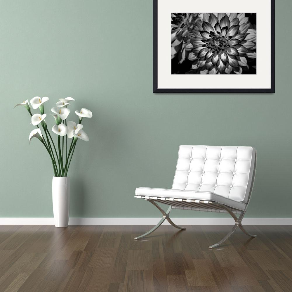 """""""Perfection in Design Black and White&quot  by DavidEStarkePhotography"""
