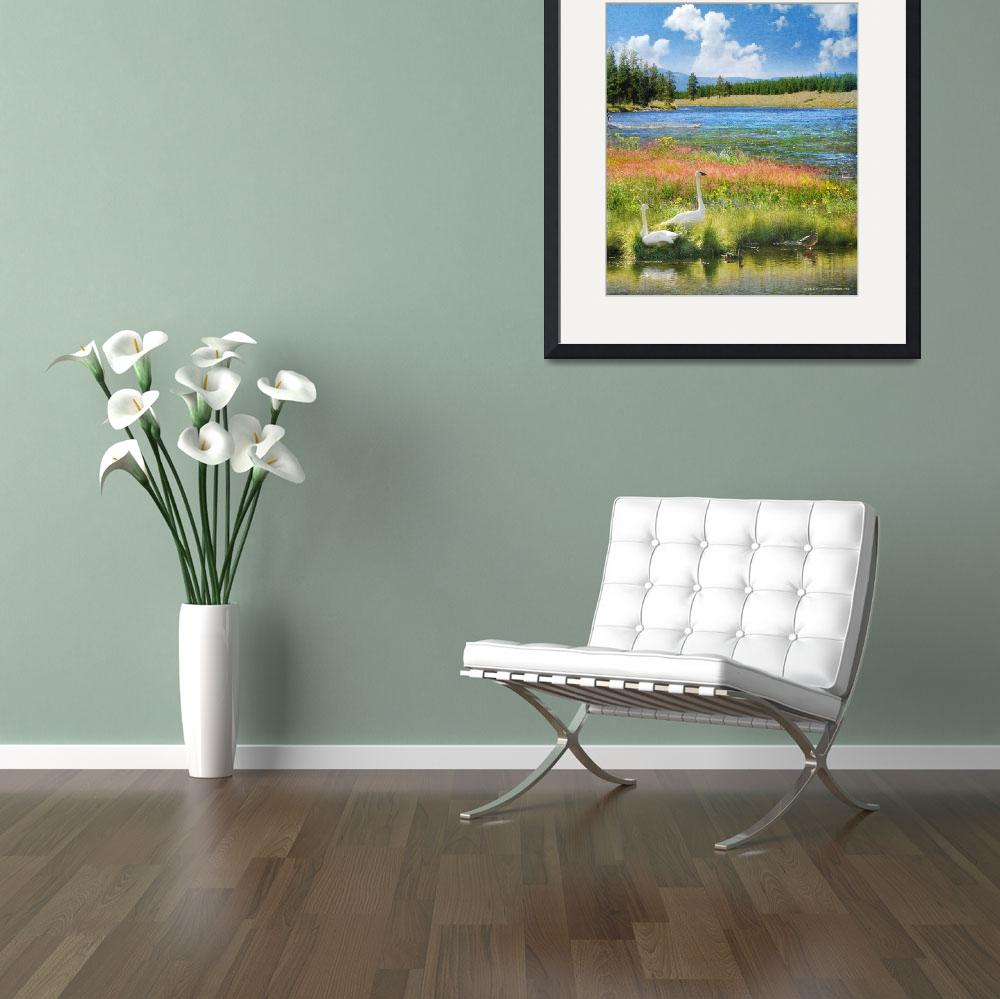 """""""swans and summer flowers at the madison river&quot  (2015) by rchristophervest"""