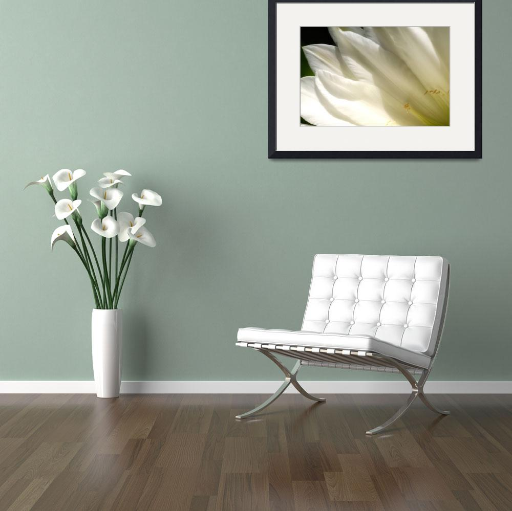 """""""White flower 6&quot  (2006) by JohnEmmaneel"""
