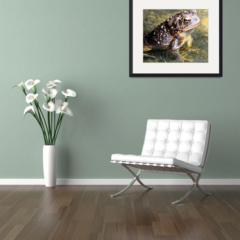 """""""Bull frog&quot  by Jewells51"""