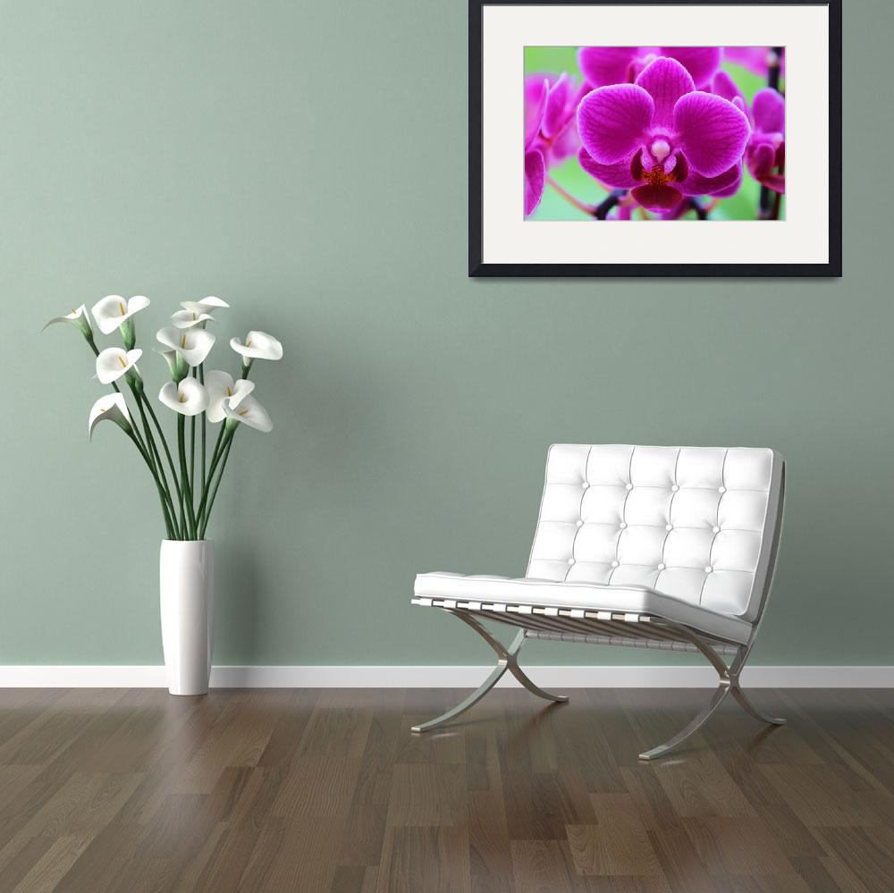"""""""Vibrant violet orchids on green background&quot  (2017) by Bluejay36"""