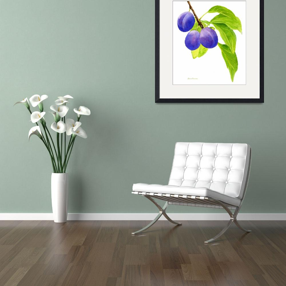 """""""Blue and Purple Plums on White&quot  (2012) by Pacific-NW-Watercolors"""