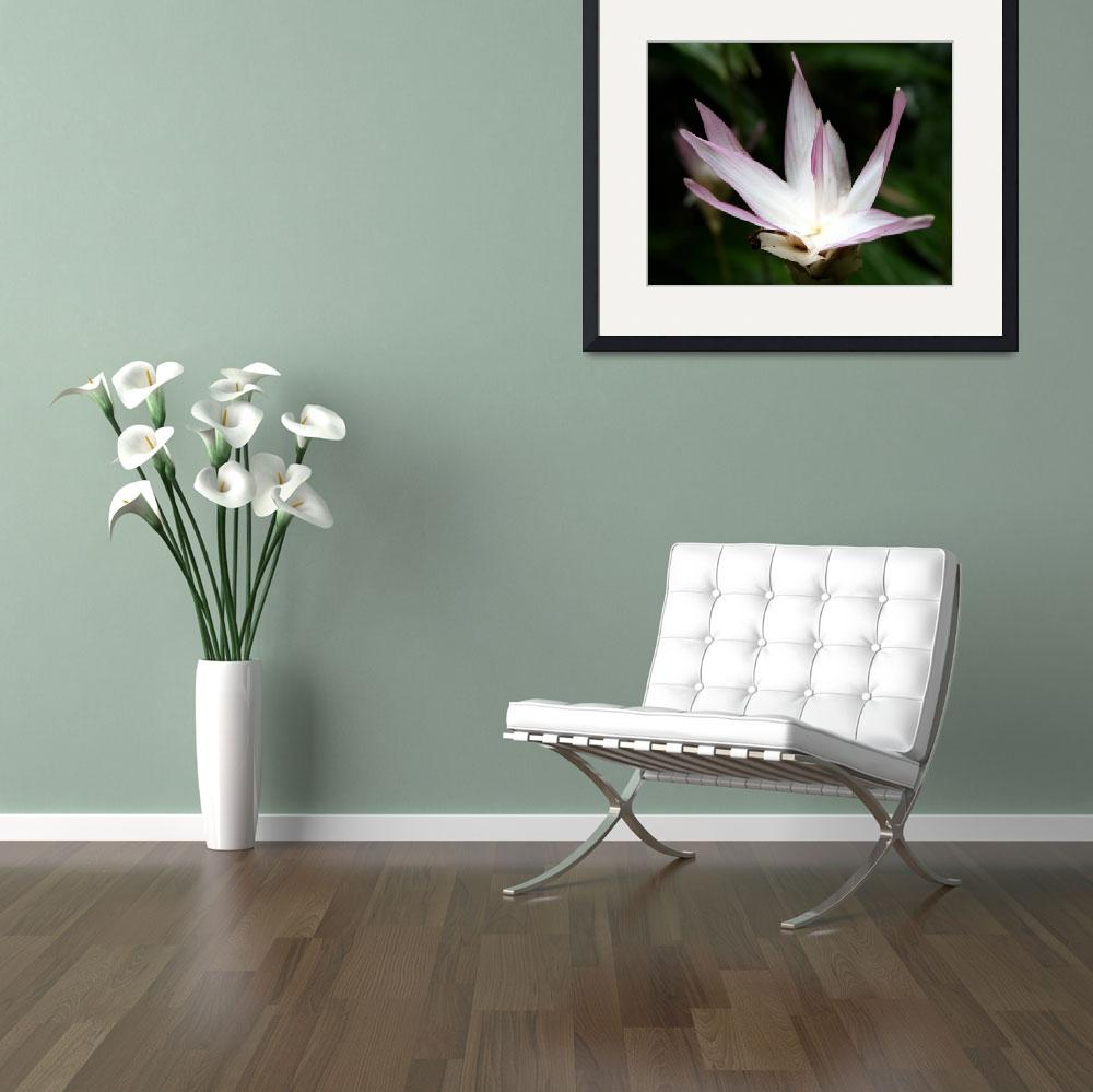 """""""tropical flower&quot  (2011) by MyTreasuredImages"""