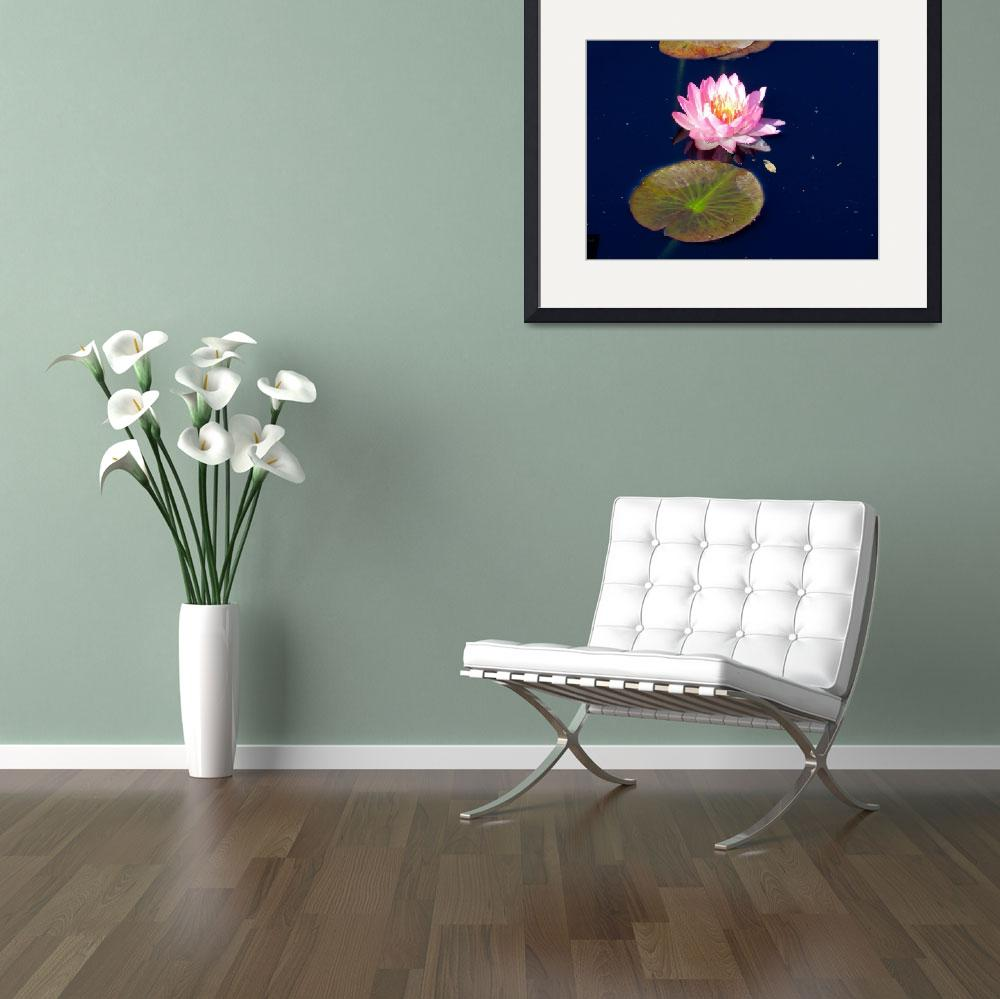 """""""pink water lily""""  by lizmix"""