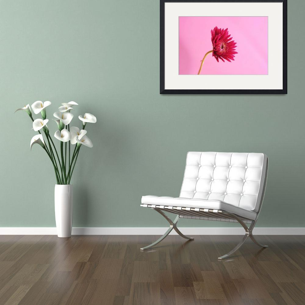 """""""Single Pink Mum_2356&quot  (2005) by AmbientCreations"""
