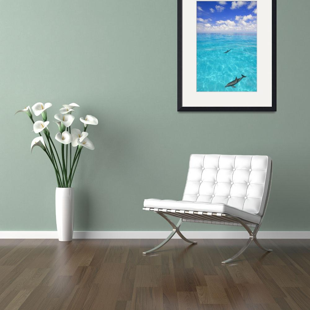 """""""Dolphins Swimming&quot  by DesignPics"""