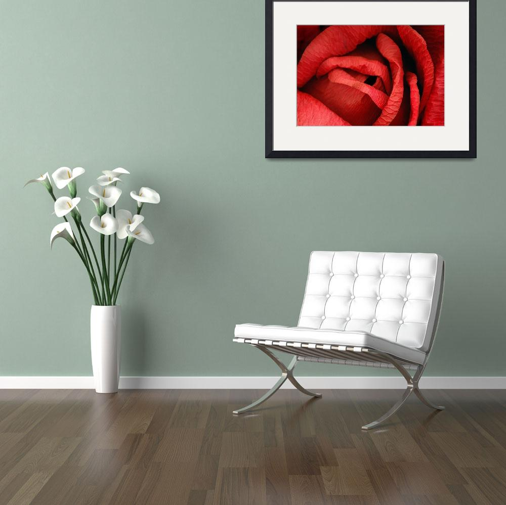 """""""Valentine: Red Paper Rose&quot  (2004) by WilshireImages"""