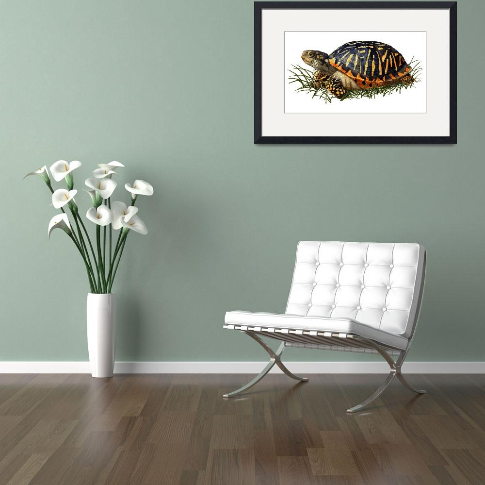 """""""Ornate Box Turtle&quot  by inkart"""