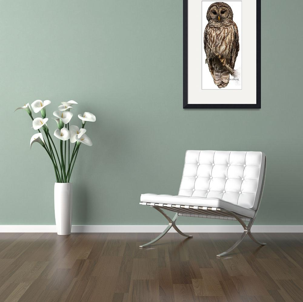 """""""Barred Owl 8630&quot  (2012) by OwlGuy"""