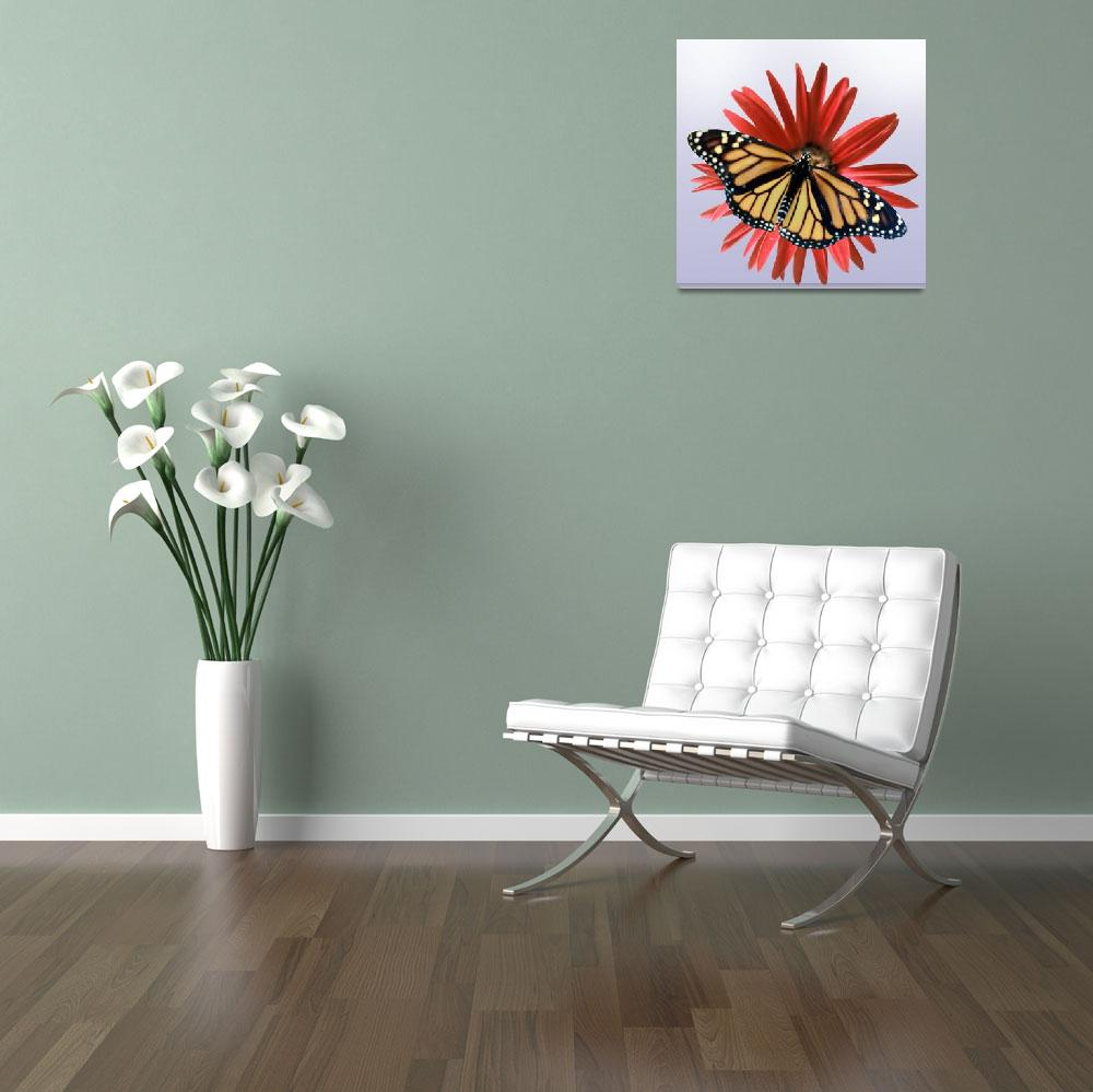 """""""Monarch on a Daisy&quot  by roim"""