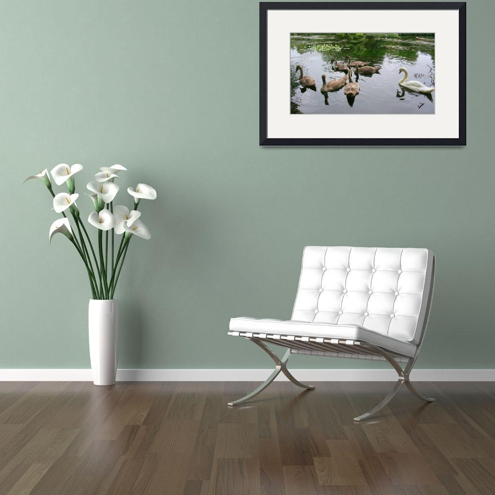 """""""Swans On The River Liffey-Dublin&quot  by willifindunow"""
