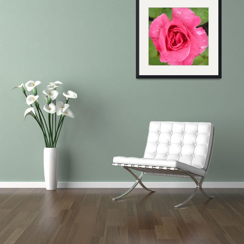 """""""rose 15&quot  (2010) by sb1photography"""