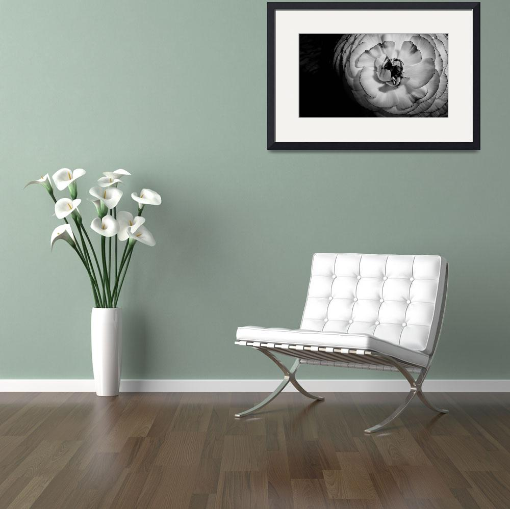 """""""Black and White Flower&quot  (2011) by NMWolverson"""