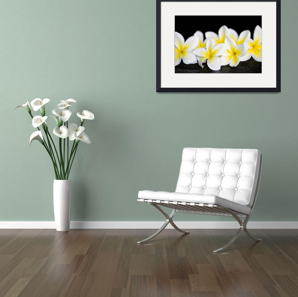 """Plumeria obtusa Singapore White&quot  (2015) by sharonmau"