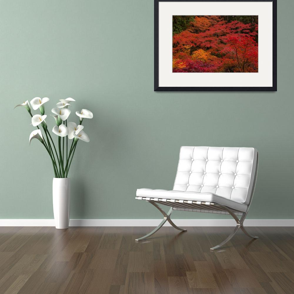 """""""Autumn Colors""""  (2009) by darinrogers"""