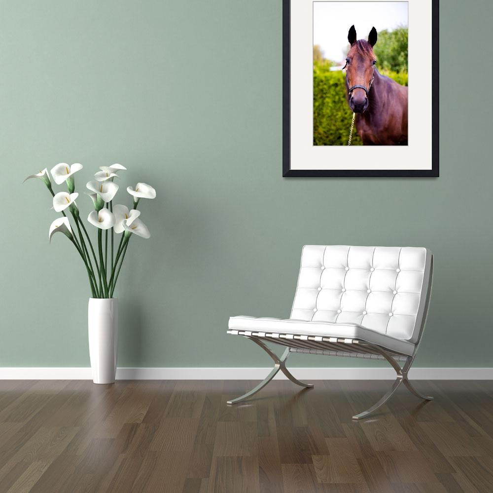 """""""Horse 2""""  (2013) by WinkImagery"""
