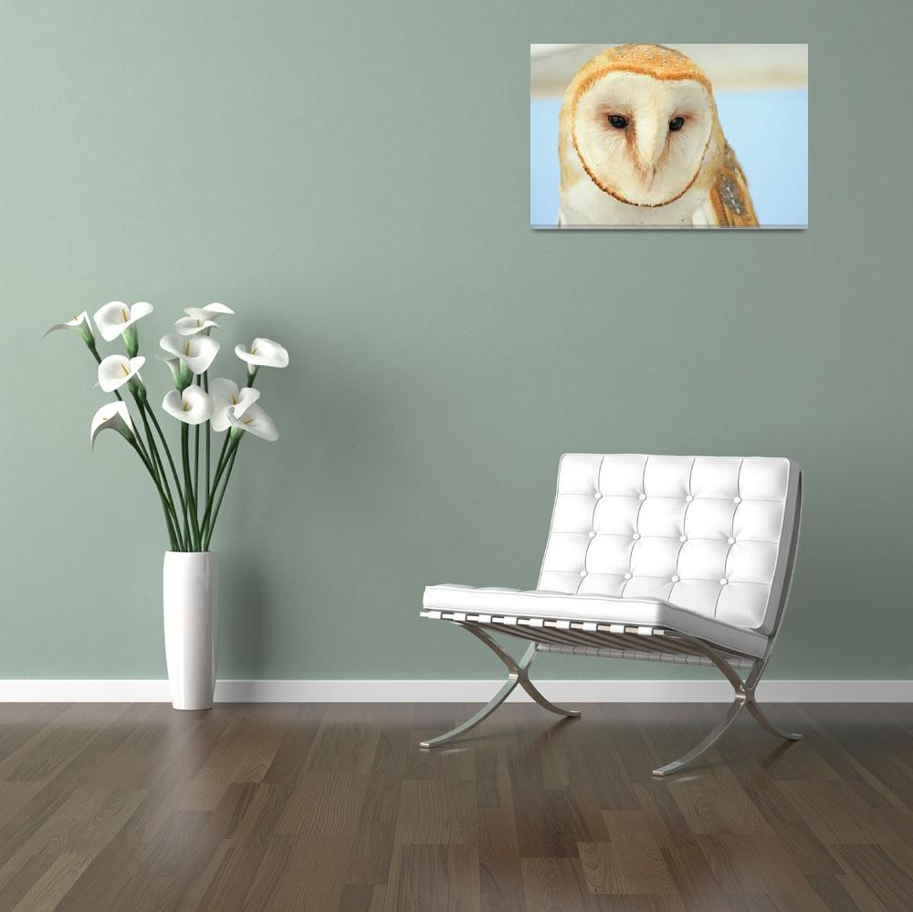 """Barn Owl&quot  (2008) by paulhood"