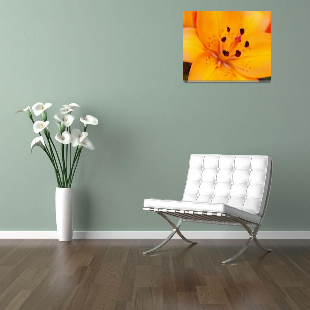 """""""Lily""""  (2008) by cre8ivepix"""