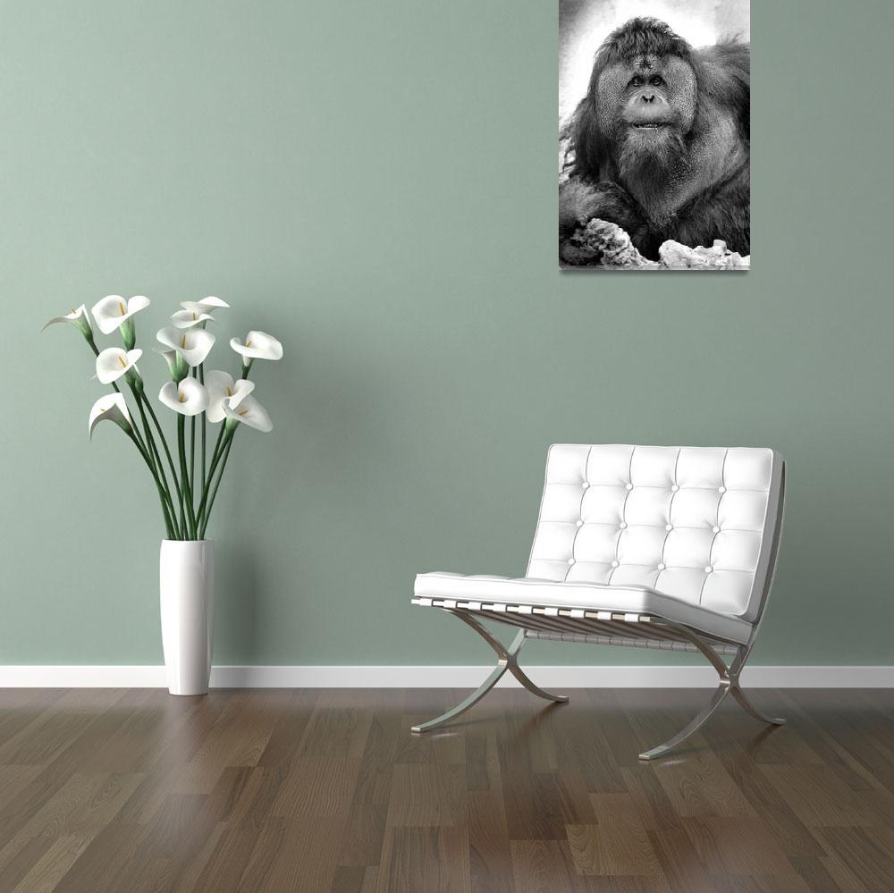 """Orangutan""  by RetroImagesArchive"