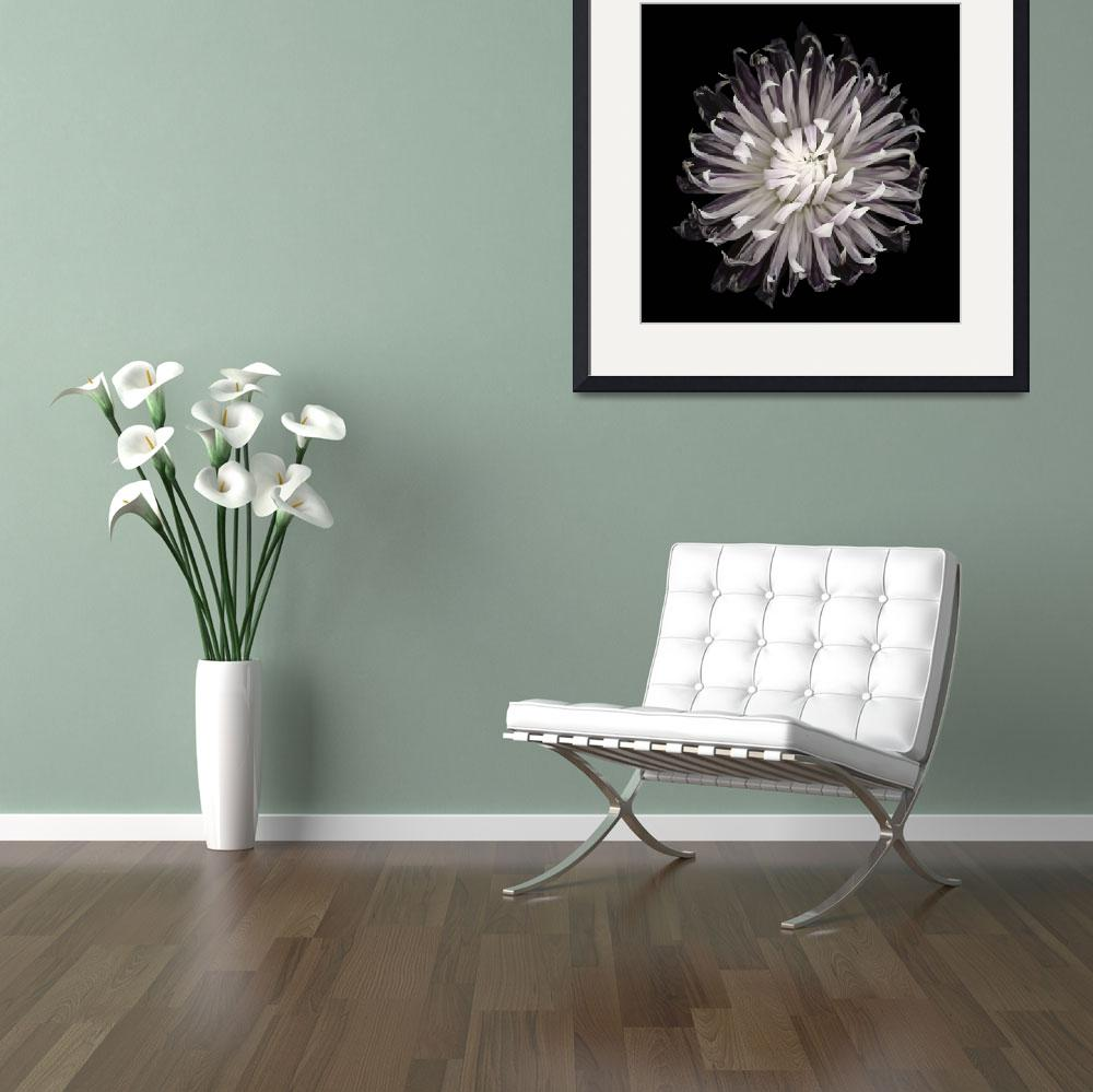 """""""Thin Petaled Dahlia&quot  (2012) by OGphoto"""