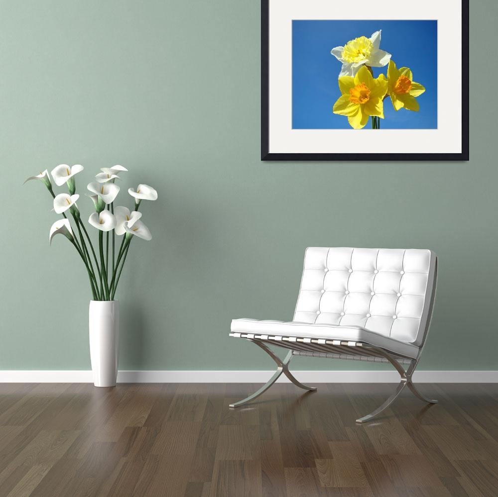 """Spring Daffodils Flowers Blue Sky gardens art&quot  (2014) by BasleeTroutman"