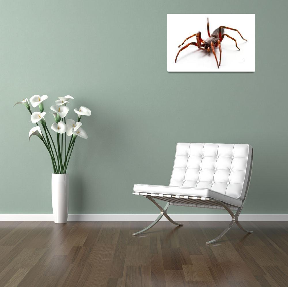 """""""White-tailed Spider in the bathtub""""  (2010) by alecrain"""
