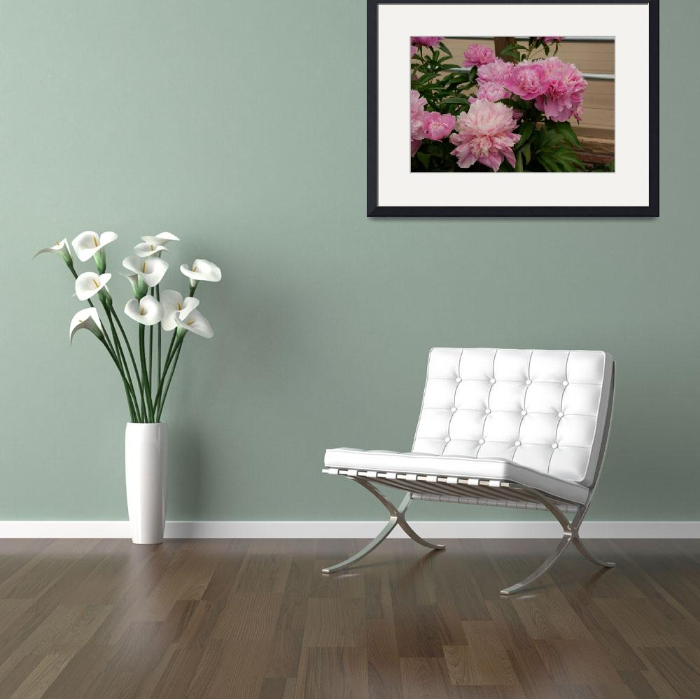"""""""Peony Clusters&quot  (2013) by DavoPix"""