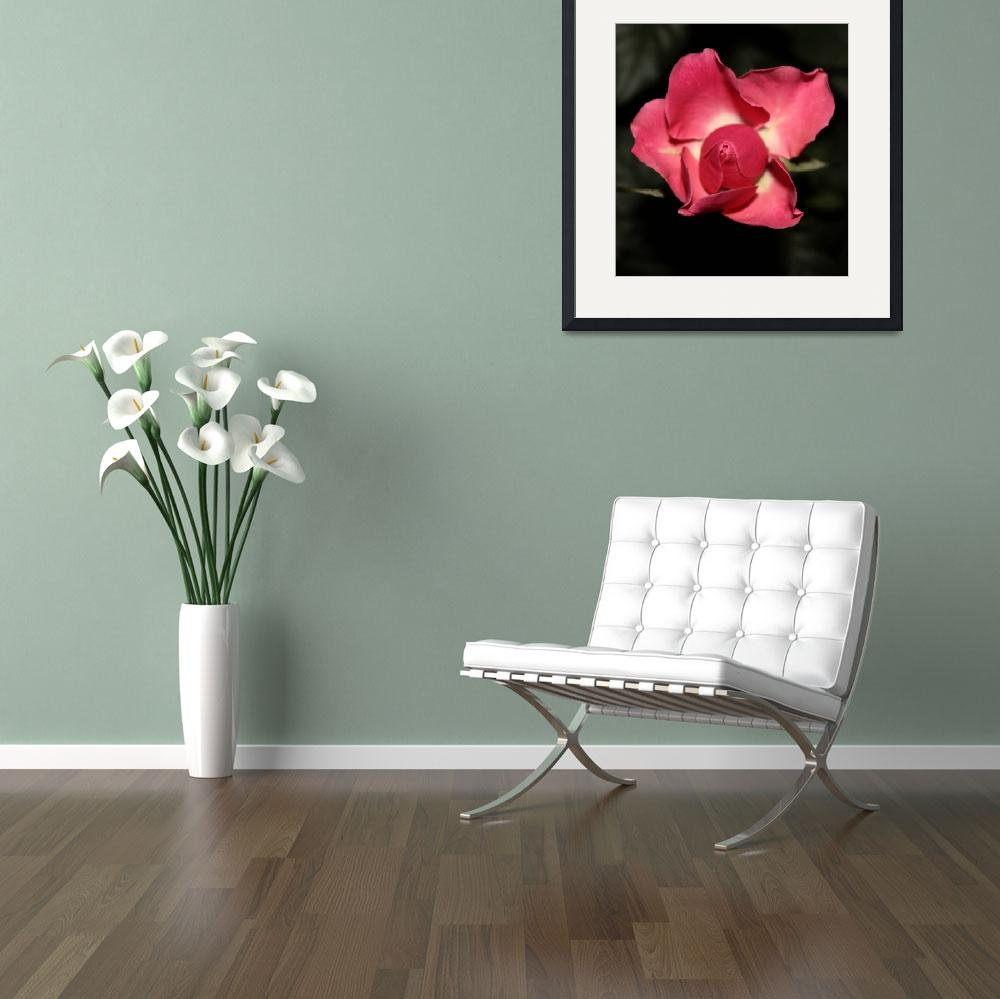 """""""Floral-Red Rose&quot  by willifindunow"""