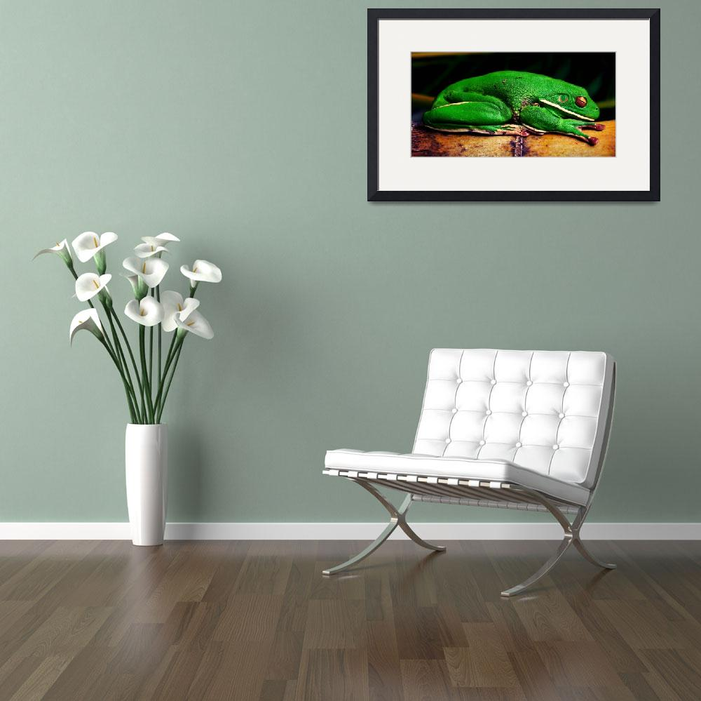 """Green tree frog&quot  (2012) by shady"