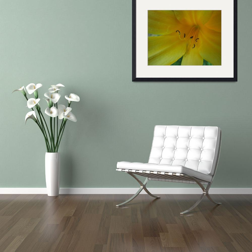 """Yellow Lily""  (2008) by alisonwest"