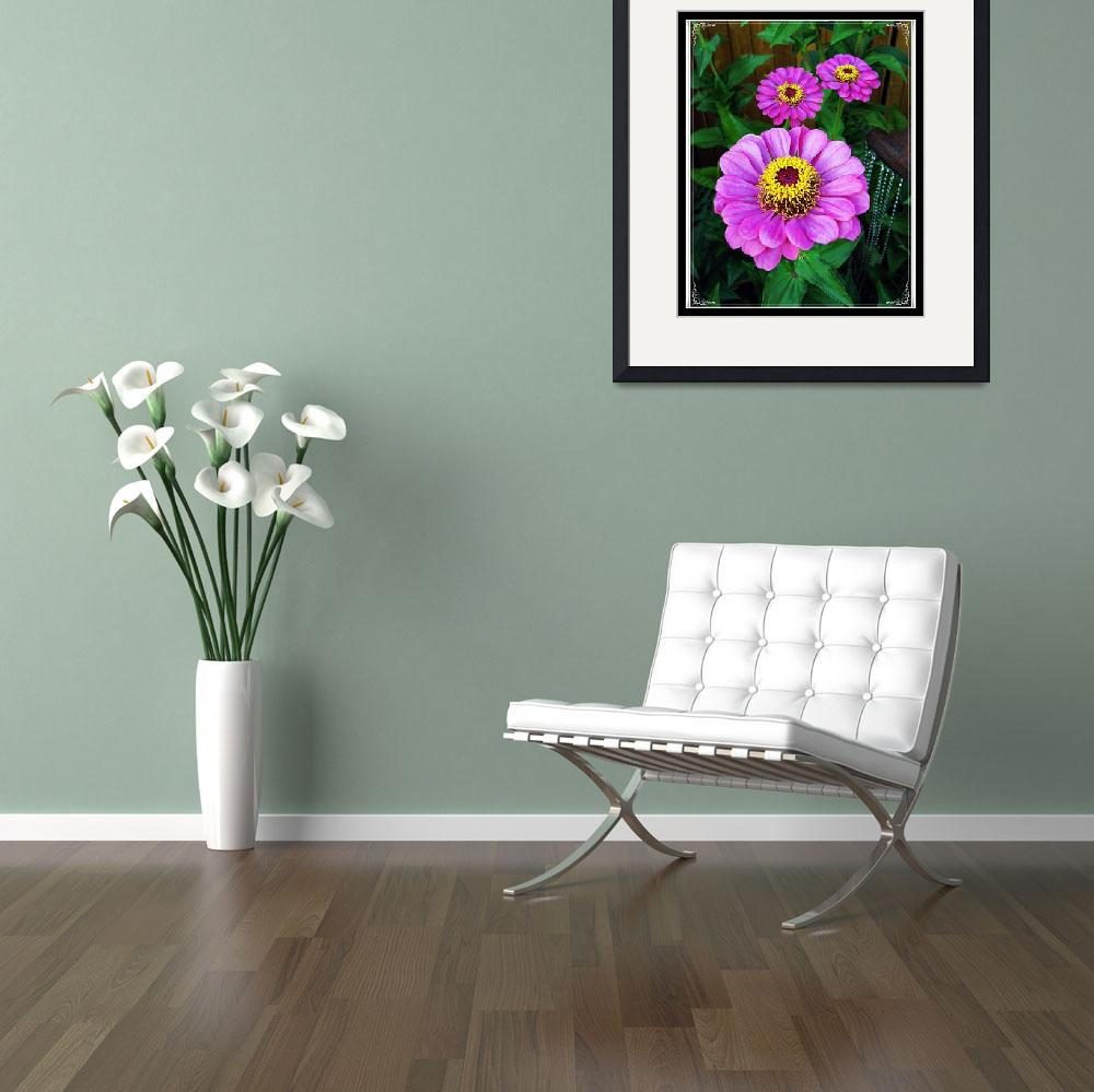 """""""Purple Zinnias - Gifts From God in The Garden&quot  (2010) by RosemanStan5488"""