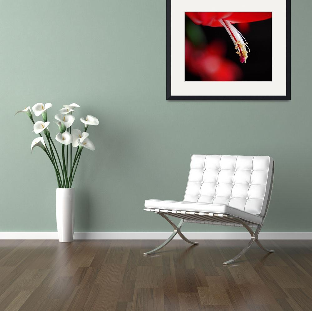 """""""Christmas Cactus Pistil and Stamens&quot  (2013) by RonaBlack"""