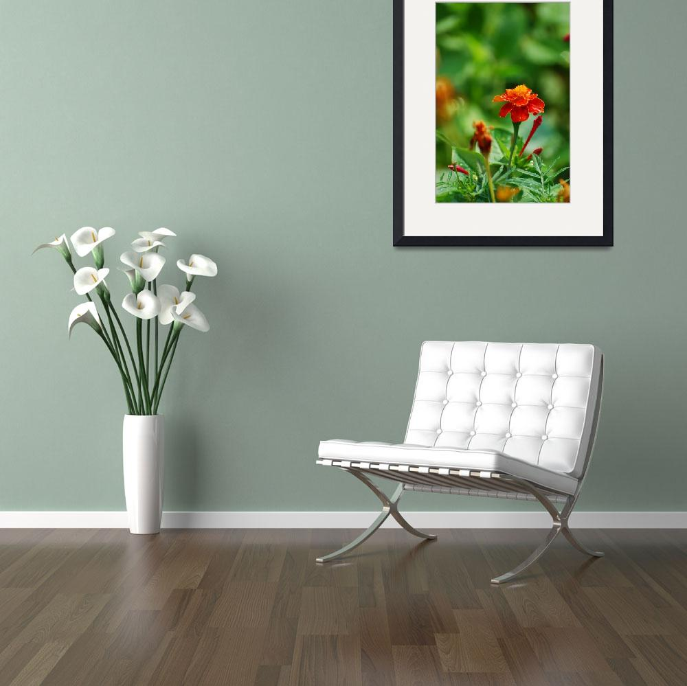 """""""Front page flower""""  (2008) by Adi_Bud_photoDesigner"""
