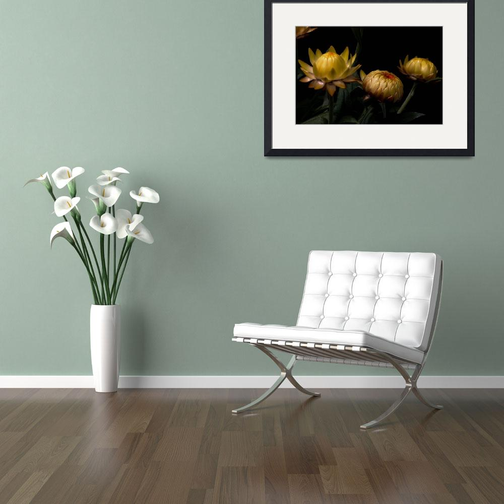 """""""Yellow Flower Buds&quot  (2013) by bavosiphotoart"""