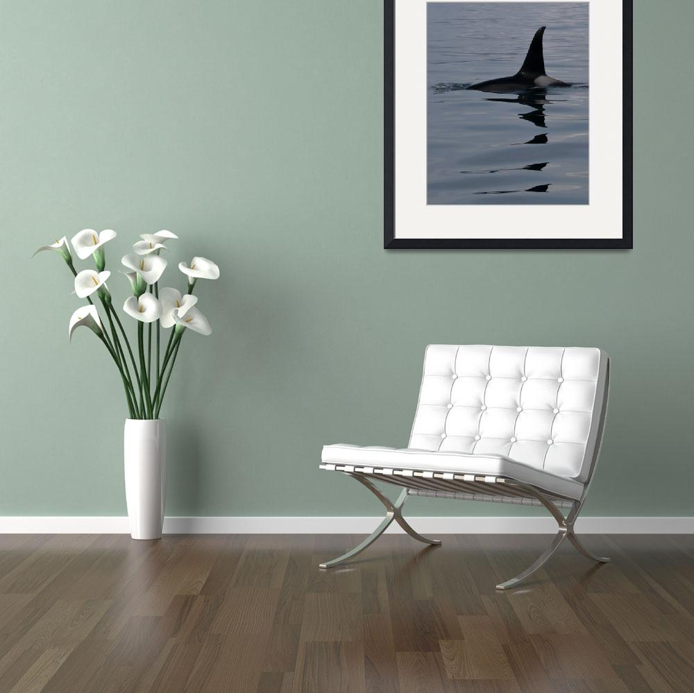 """""""Rippling Orca Reflections&quot  by AdventureImages"""