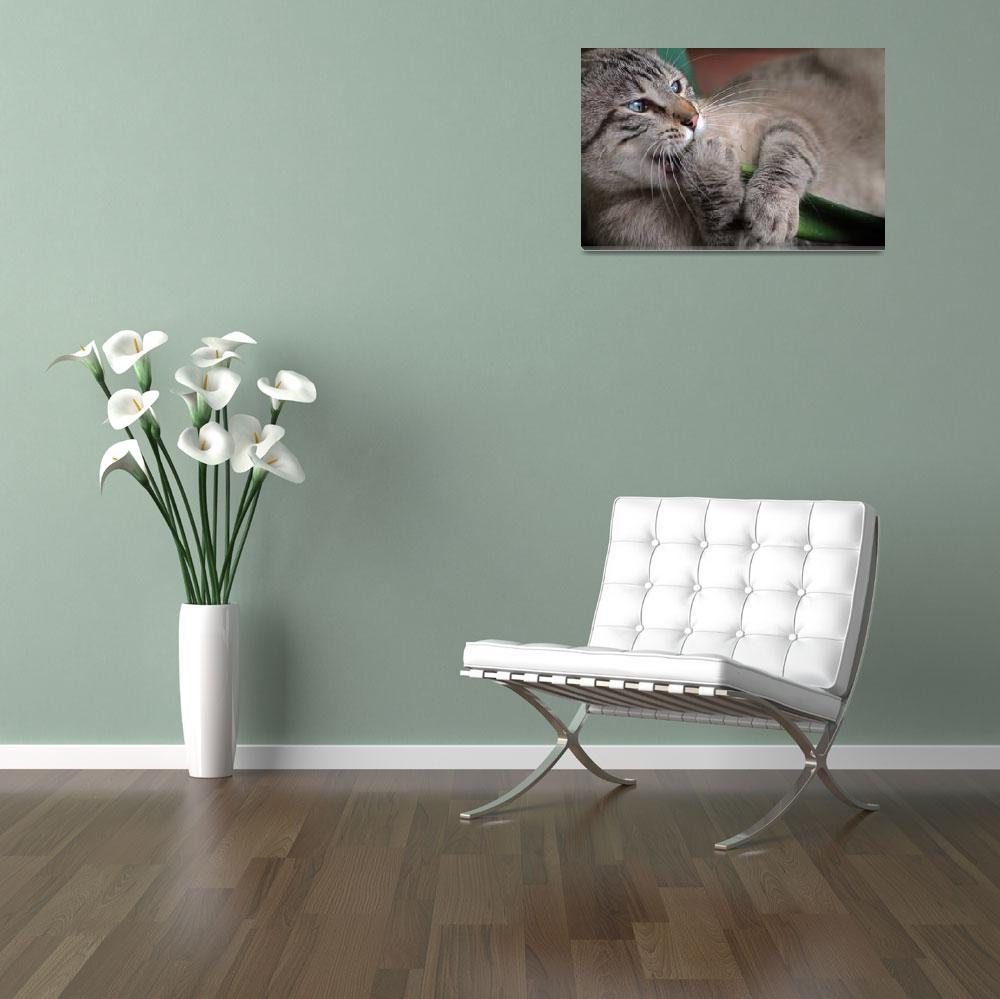 """gray cat&quot  (2013) by MichelaVilla"
