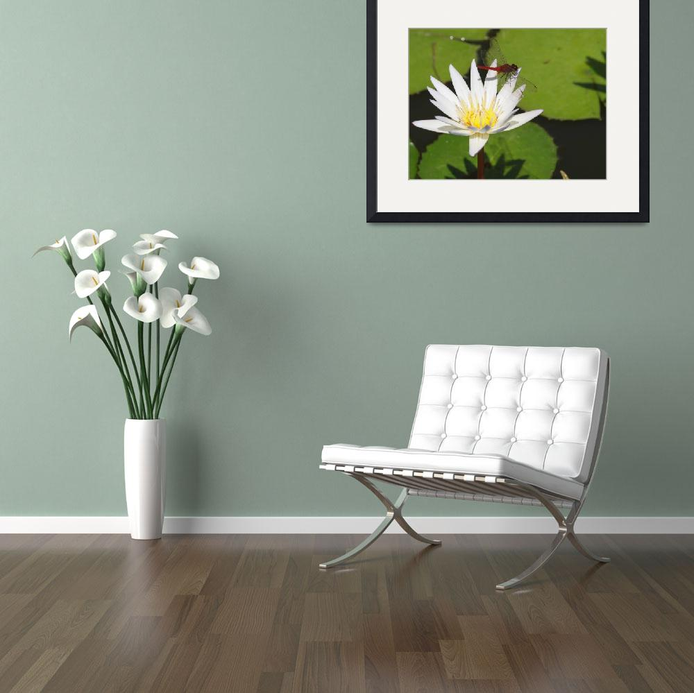 """""""Dragonfly On Water Lily&quot  (2011) by JBrooker"""
